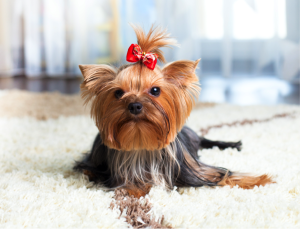 pet stains chester county